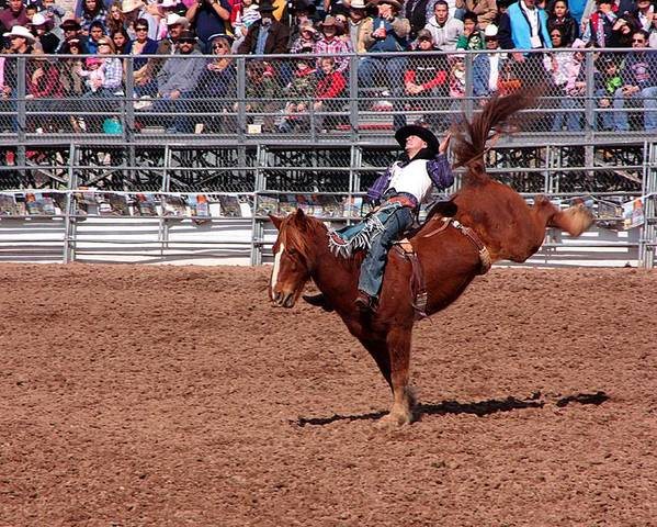 Rodeo. Rodeos Poster featuring the photograph A Bumpy Ride by Joe Kozlowski