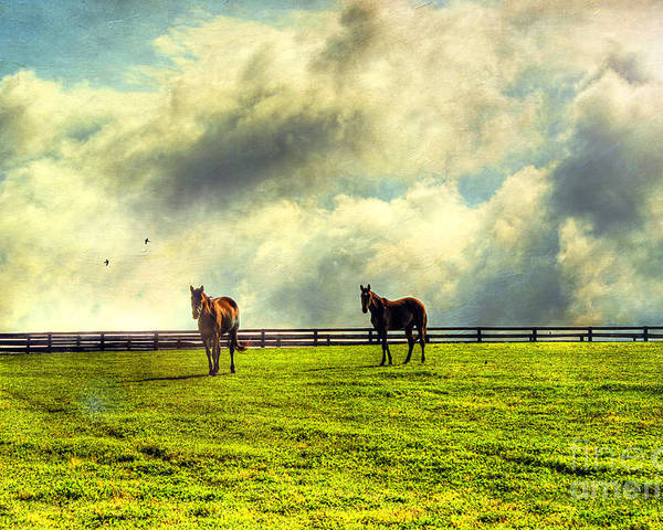 Two Poster featuring the photograph A Day In Kentucky by Darren Fisher