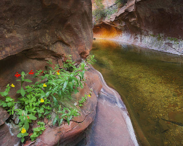 West Fork Oak Creek Canyon Poster featuring the photograph A Frogs Rest by Peter Coskun