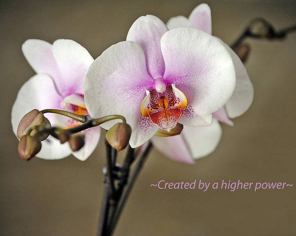 Orchid Poster featuring the photograph A Higher Power by Skip Willits
