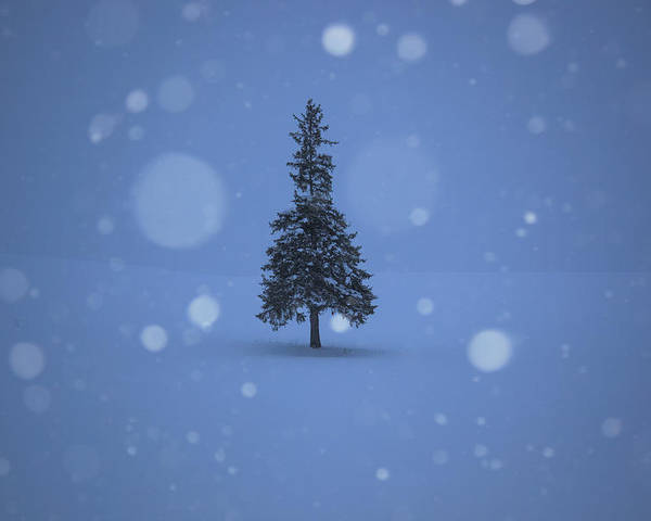 Lonely Christmas.A Lonely Christmas Tree Poster