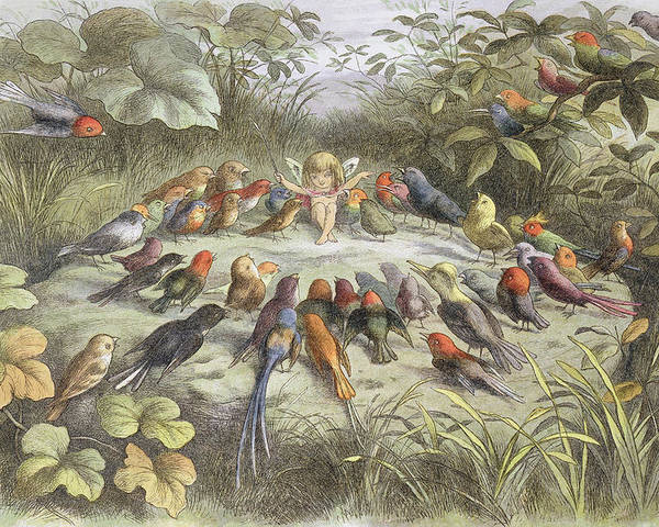Bird Poster featuring the drawing A Rehearsal In Fairy Land, Illustration by Richard Doyle