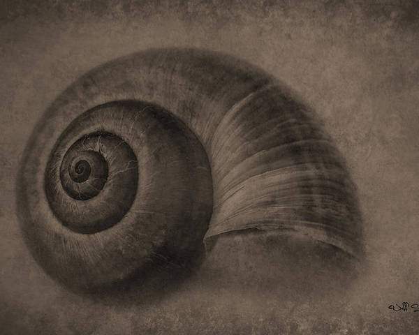 Snail Poster featuring the photograph A Simple Home In Sepia by Jeff Swanson