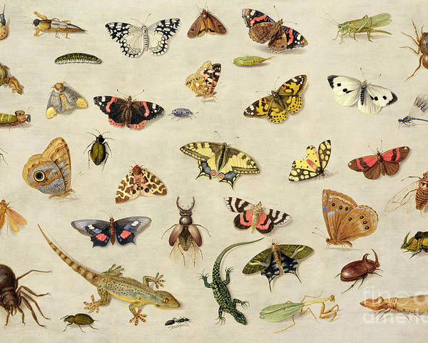 Collection Poster featuring the painting A Study Of Insects by Jan Van Kessel