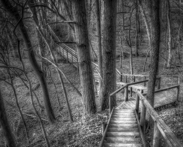 Trees Poster featuring the photograph A Walk Through The Woods by Scott Norris