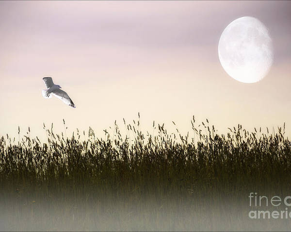 Landscape Poster featuring the photograph Above The Tall Grass by Tom York Images