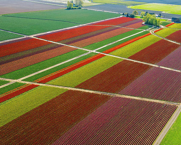 Scenics Poster featuring the photograph Aerial View Of Colorful Tulip Fields by Pete Saloutos