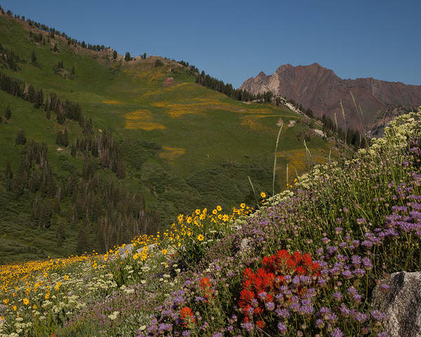 Utah Poster featuring the photograph Albion Basin Summer by Susan Rovira