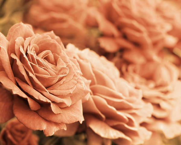 Rose Poster featuring the photograph All The Orange Roses by Jennie Marie Schell