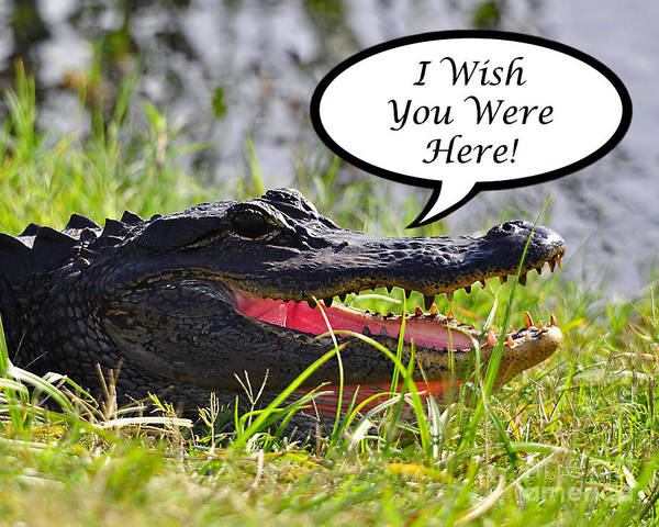 Greeting Card Poster featuring the photograph Alligator Greeting Card by Al Powell Photography USA