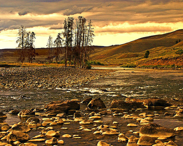 Yellowstone Poster featuring the photograph Along The Larmar River by Marty Koch
