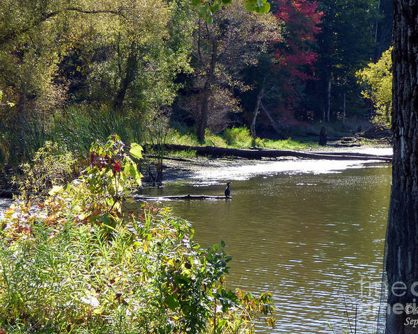 Nature Poster featuring the photograph Along The Waters Edge by Rennae Christman