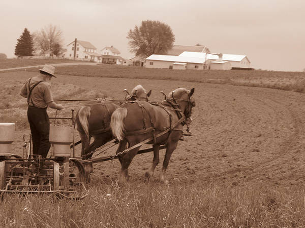 Amish Life Poster featuring the photograph Amish Farmer by Janet Pugh