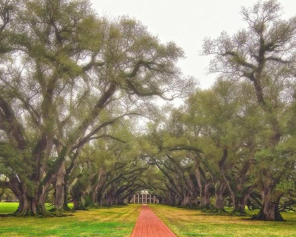 Oak Alley Plantation Poster featuring the photograph And Time Stood Still by Steve Harrington