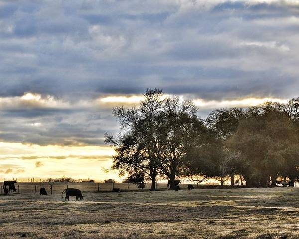 Landscapes Poster featuring the photograph Angus Evening by Jan Amiss Photography