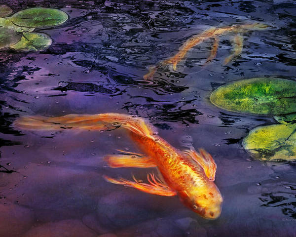 Savad Poster featuring the photograph Animal - Fish - There's Something About Koi by Mike Savad
