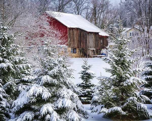 Evergreen Poster featuring the photograph Another Wintry Barn by Joan Carroll