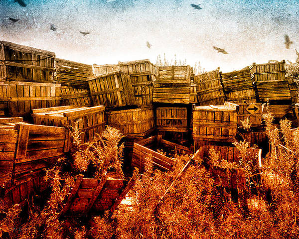 Apple Poster featuring the photograph Apple Crates And Crows by Bob Orsillo
