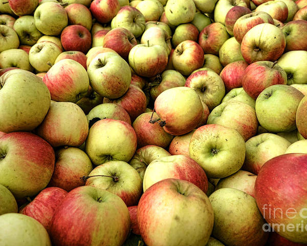 Apple Poster featuring the photograph Apples by Olivier Le Queinec
