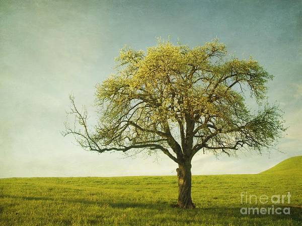 Appletree Poster featuring the photograph Appletree by Priska Wettstein
