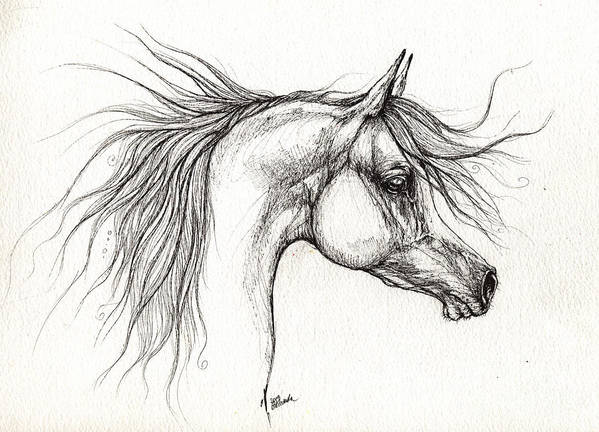 Horse Poster featuring the drawing Arabian Horsedrawing 28 08 2013 by Angel Ciesniarska