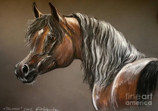 Arabian Horse Poster featuring the drawing Arabian Mare by Angel Ciesniarska