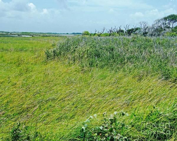 Texas Poster featuring the photograph Aransas Nwr Coastal Grasses by Lizi Beard-Ward