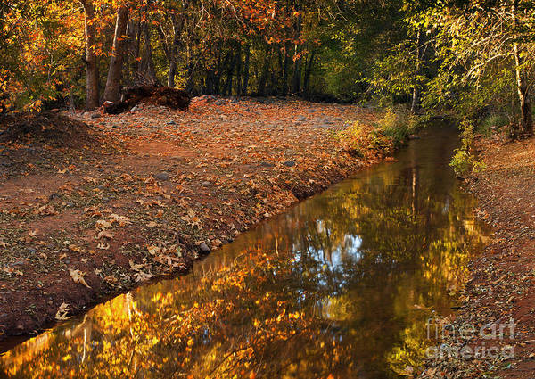 Autumn Poster featuring the photograph Arizona Autumn Reflections by Mike Dawson