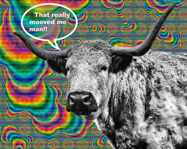 Cow Poster featuring the photograph Arty Coo Really Mooved by John Farnan