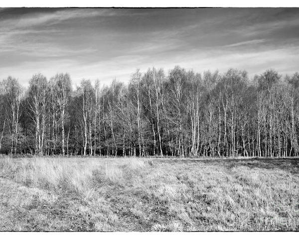 Ashdown Forest Poster featuring the photograph Ashdown Forest Trees In A Row by Natalie Kinnear