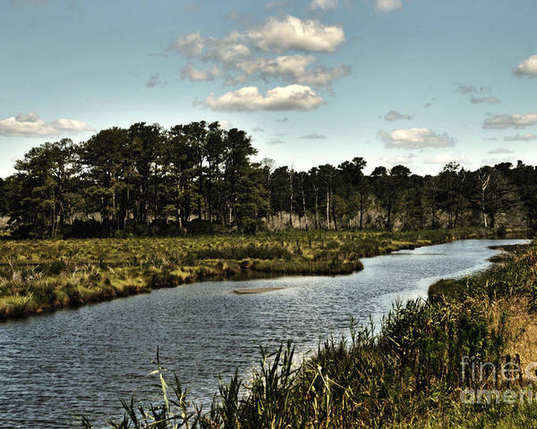 Landscape Poster featuring the photograph Assateague Island - A Nature Preserve by Gerlinde Keating - Galleria GK Keating Associates Inc