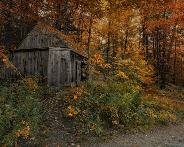 Barn Poster featuring the photograph Autumn Canopy by Robin-Lee Vieira