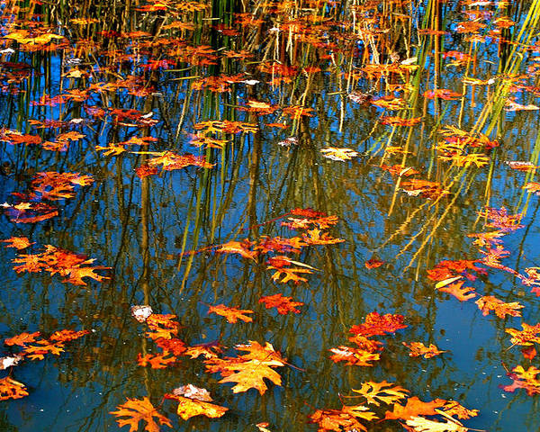 Autumn Poster featuring the photograph Autumn Floating by Peggy Franz