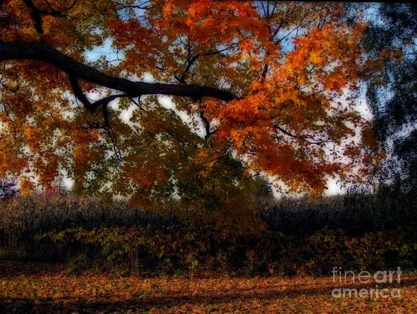 Autumn In The Country Poster featuring the photograph Autumn In The Country by Inspired Nature Photography Fine Art Photography