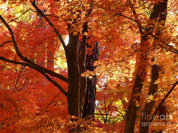 Autumn Leaves Poster featuring the photograph Autumn Leaves by Carol Groenen