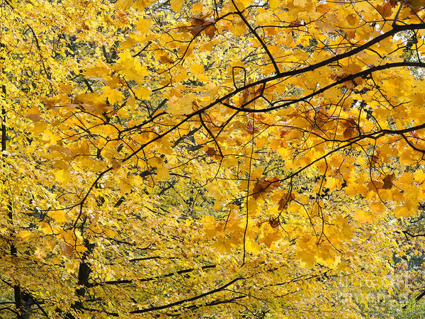 Autumn Poster featuring the photograph Autumn Leaves by Michal Boubin
