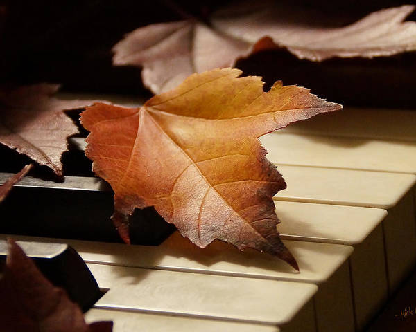Autumn Poster featuring the photograph Autumn Piano 13 by Mick Anderson