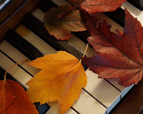 Autumn Poster featuring the photograph Autumn Piano 2 by Mick Anderson