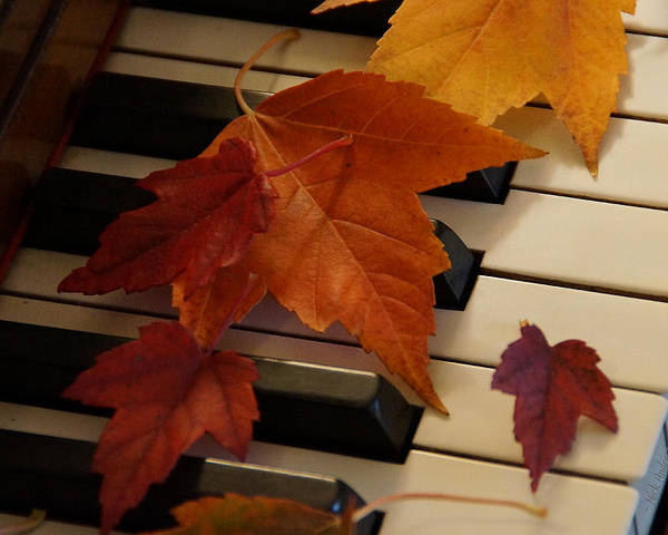 Autumn Poster featuring the photograph Autumn Piano 6 by Mick Anderson