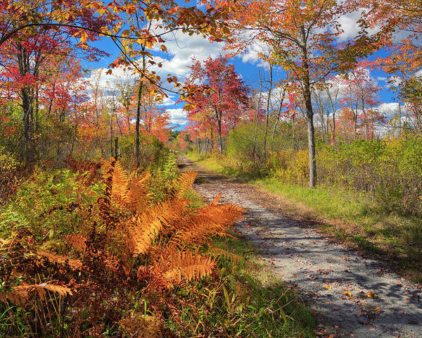 Autumn In New England Poster featuring the photograph Autumn Splendor by Bill Wakeley
