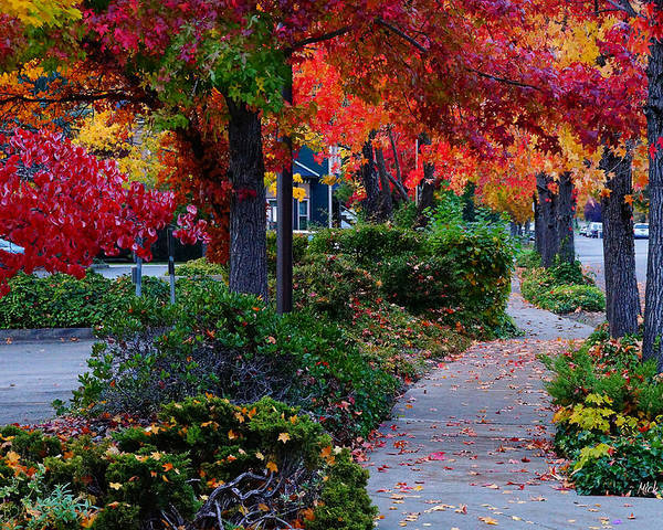Grants Pass Poster featuring the photograph Autumn Walk In Grants Pass by Mick Anderson