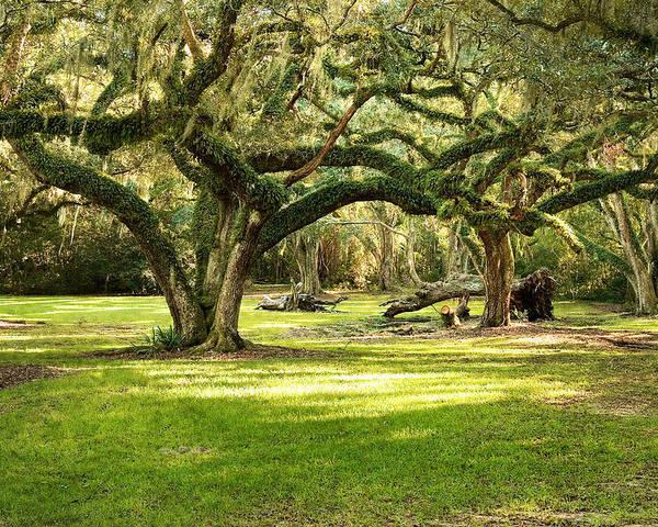 Oak Trees Poster featuring the photograph Avery Island Oaks by Scott Pellegrin