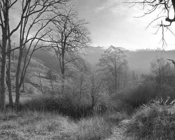 Washington State Horizontal Landscape Black And White Trees Nature Rural Soft Light Bark Trunk Hwy 142 Poster featuring the digital art Back Roads Of Washington II by Helen Roach