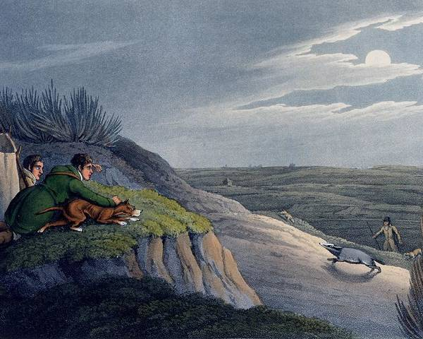 Hunt Poster featuring the drawing Badger Catching, 1820 by Henry Thomas Alken