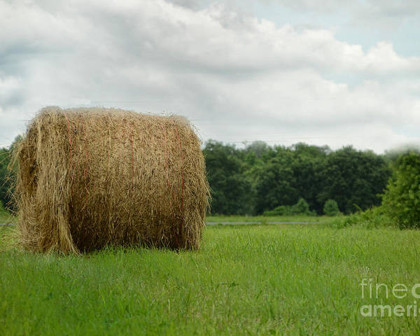 Landscape Poster featuring the photograph Bales by Tamera James