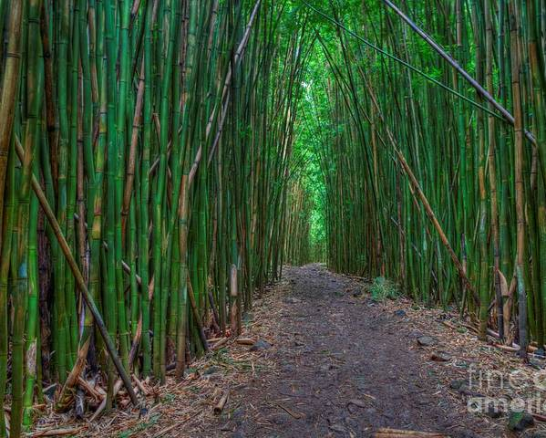 Bamboo Forest Poster featuring the photograph Bamboo Bliss by James Anderson
