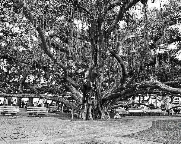 Banyan Tree Poster featuring the photograph Banyan Tree by Scott Pellegrin