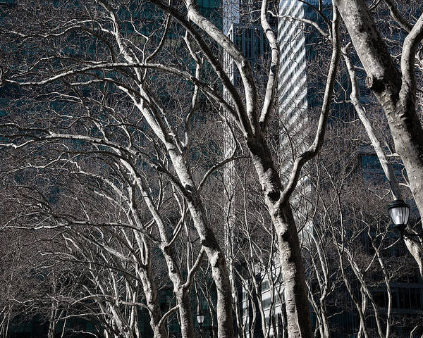 Bare Trees Poster featuring the photograph Bare by Joanna Madloch