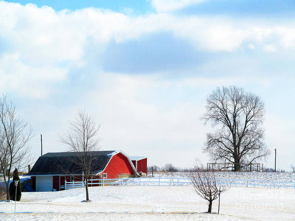 Barns Poster featuring the photograph Barn Covered With Snow by Tina M Wenger