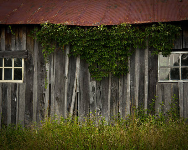 Barn Poster featuring the photograph Barn Eyes by Shane Holsclaw